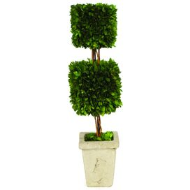 """Preserved 24"""" Boxwood Topiary"""