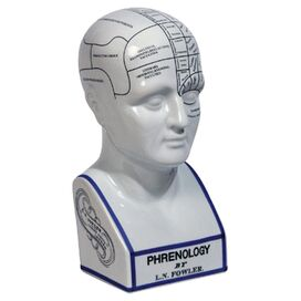 Phrenology Head Decor