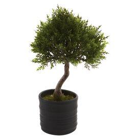 Faux Cedar Bonsai Tree (Set of 2)