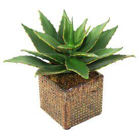 Faux Aloe