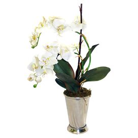 Faux Orchid in White