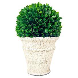 Preserved Boxwood in Ceramic Vase