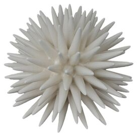 Sea Urchin Decor