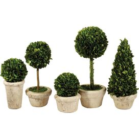 5-Piece Preserved Boxwood Topiary Set