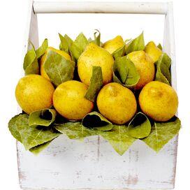 Faux Lemon & Rolled Salal