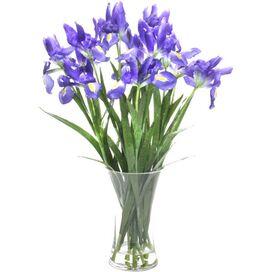 Faux Iris