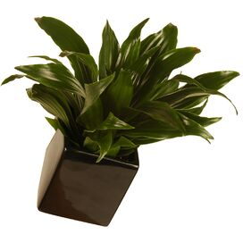 Cube Wall Planter in Black