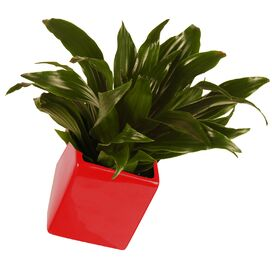 Cube Wall Planter in Red