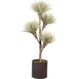 Preserved Dracena Tree