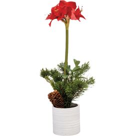 Faux Red Amaryllis