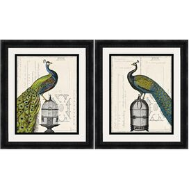 Regal Peacock Framed Print (Set of 2)